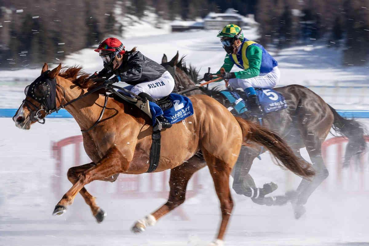 pferderennen sportwetten sportwettenvergleich